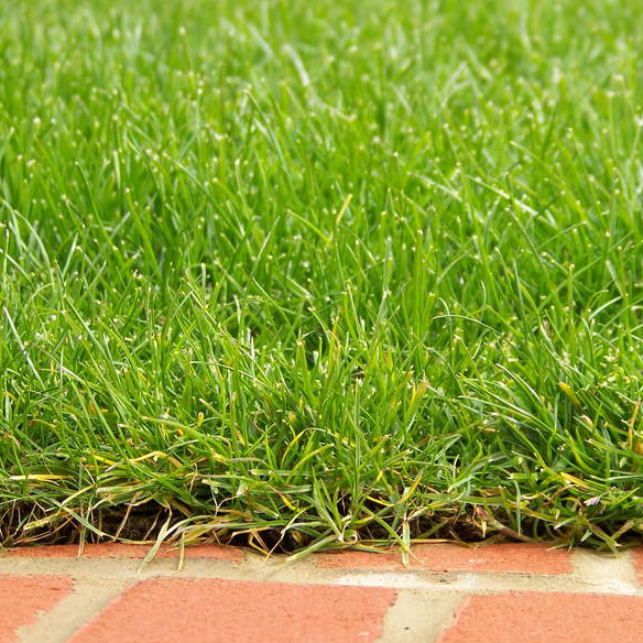 lawns-turfing-landscape-services
